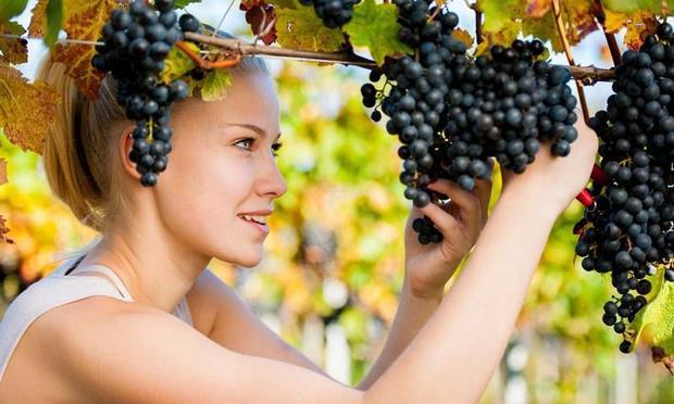 Üzüm Çekirdeği Yağını Ciltte Kullanmanın Faydaları Nelerdir?